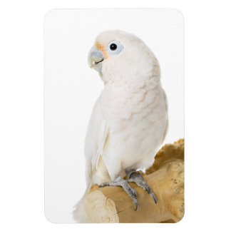 Cockatoo white parrot bird beautiful photo, gift magnet