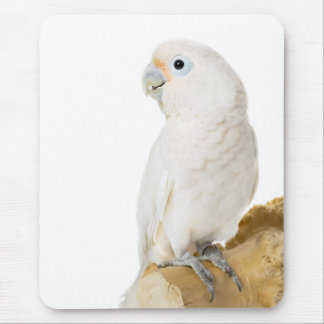 Cockatoo white parrot bird beautiful photo, gift mouse pad