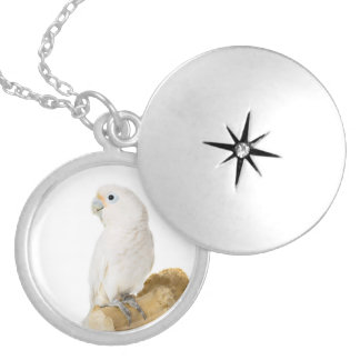 Cockatoo white parrot bird beautiful photo, gift silver plated necklace