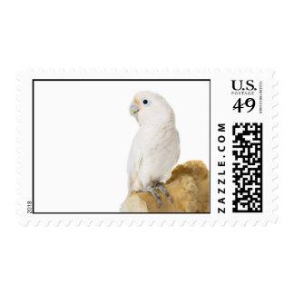 Cockatoo white parrot bird beautiful photo stamps