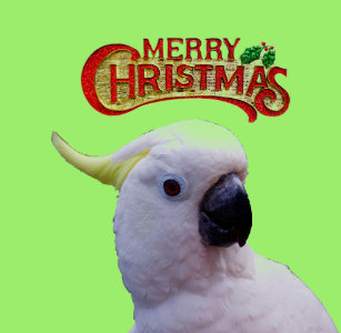 Cockatoo Christmas Decorations Zazzle