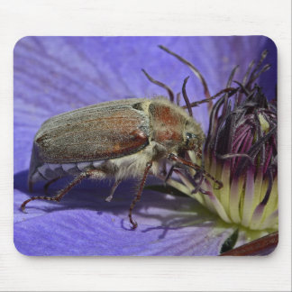 Cockchafer Beetle Mouse Mat