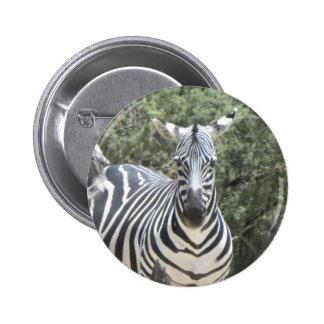 Cocked-ear zebra pin
