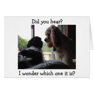 COCKER / HAVANESE SAY WHICH BIRTHDAY IS IT? CARD