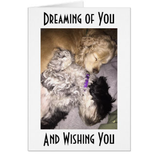 COCKER/HAVENESE CUDDLE AND SEND BIRTHDAY WISHES CARD