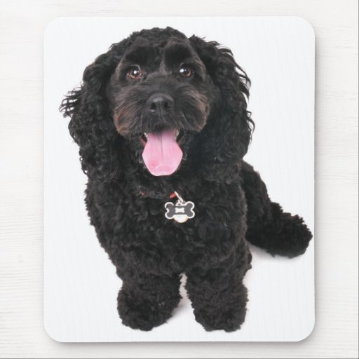 cocker poodle mix puppy  looking up mousepads