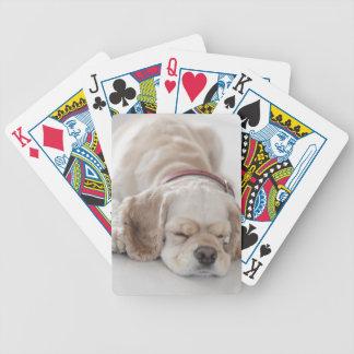 Cocker spaniel dog sleeping bicycle playing cards