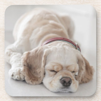Cocker spaniel dog sleeping drink coasters
