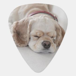 Cocker spaniel dog sleeping guitar pick