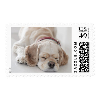 Cocker spaniel dog sleeping postage