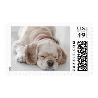 Cocker spaniel dog sleeping postage