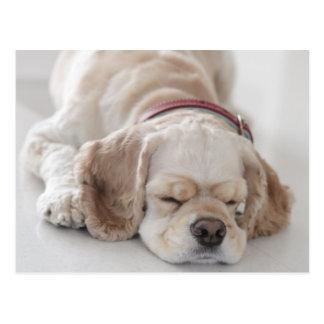 Cocker spaniel dog sleeping postcard