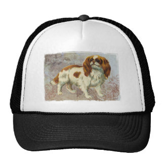 Cocker spaniel gorras