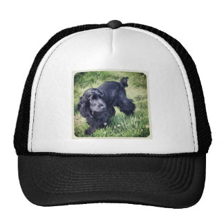Cocker spaniel gorros bordados