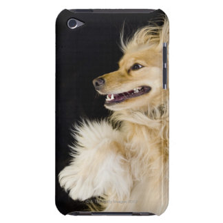 cocker spaniel mix on its back iPod Case-Mate case