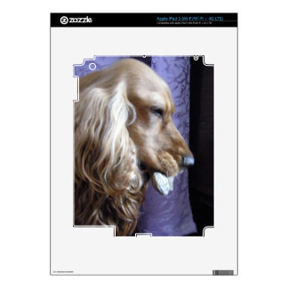 Cocker spaniel pegatina skin para iPad 3