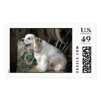 Cocker Spaniel Postage Stamps