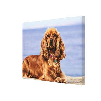 Cocker Spaniel - San Carlos Beach - Lady Canvas Print