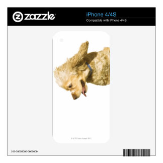 Cocker Spaniel Skin For iPhone 4
