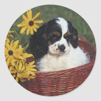 Cocker Spaniel Stickers
