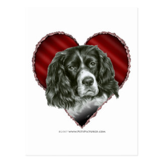 Cocker Spaniel with Heart Postcard