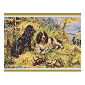 Cocker Spaniels Post Card