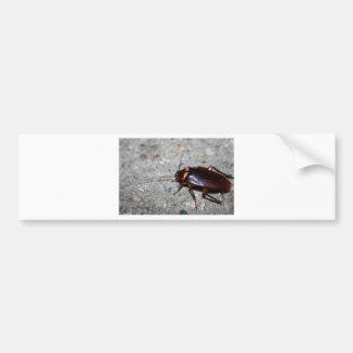 Cockroach! Bumper Sticker