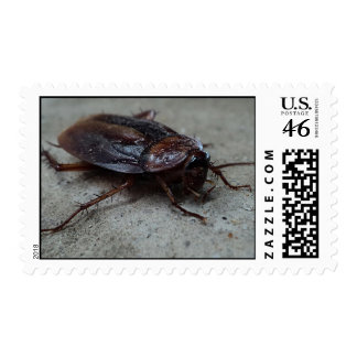 Cockroach Postage
