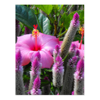Cockscomb and Hibiscus Post Cards