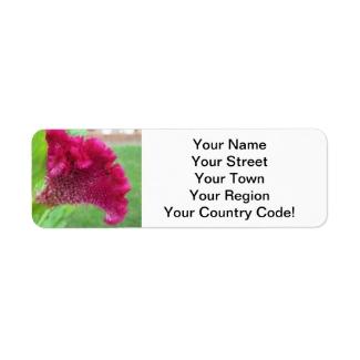 Cockscomb Celosia Red Flower