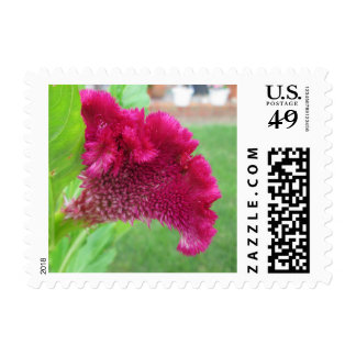 Cockscomb Celosia Red Flower Postage