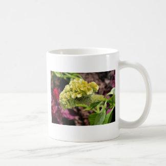 Cockscomb Coffee Mug