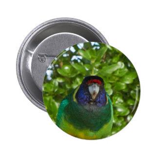 Cocky 28 pinback button