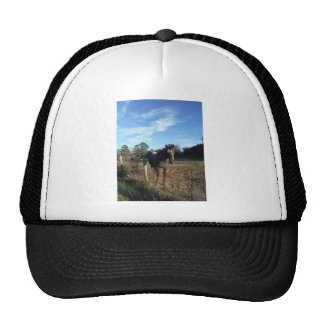 Coco and Cream brown horse Trucker Hat