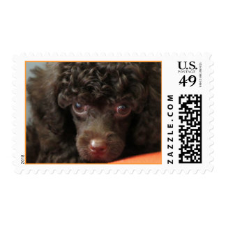 Coco Baby Postage