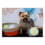 Coco Chanel - Yorkie -4 Greeting Cards