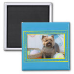 Coco Chanel - Yorkie -4 Magnet