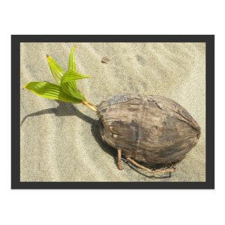 Coco en la playa postal