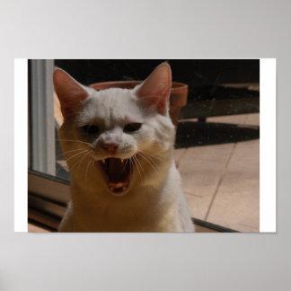 Coco los gritos del gato póster