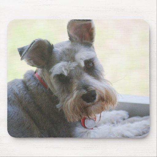 Coco, mini Schnauzer mousepad