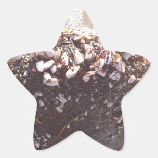 Coco Pegatina En Forma De Estrella