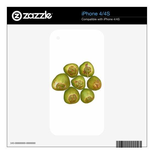 Coco verde rechoncho iPhone 4 skins