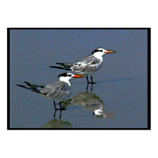 Cocoa Beach, FL 2 Birds2004~1  by jGibney  ATC ~OE Large Business Cards (Pack Of 100)