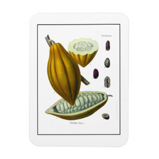 Cocoa bean vintage illustration magnet