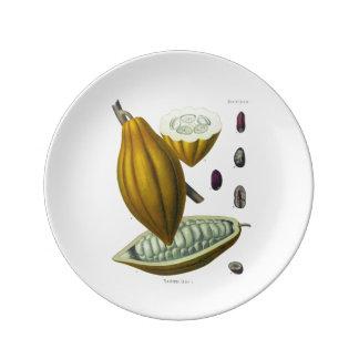 Cocoa bean vintage illustration plate