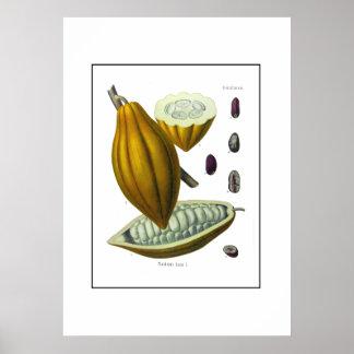 Cocoa bean vintage illustration print