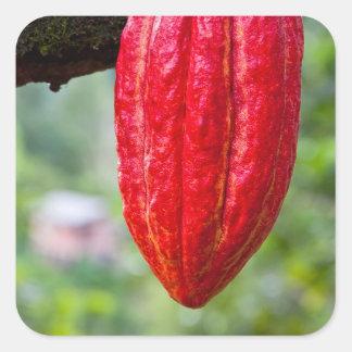 cocoa pod red square sticker