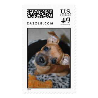 Cocoa Puppy Postage