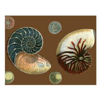 Cocoa Shell Postcard