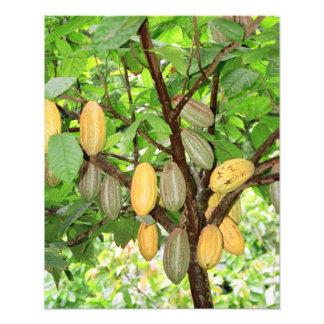 Cocoa tree photograph